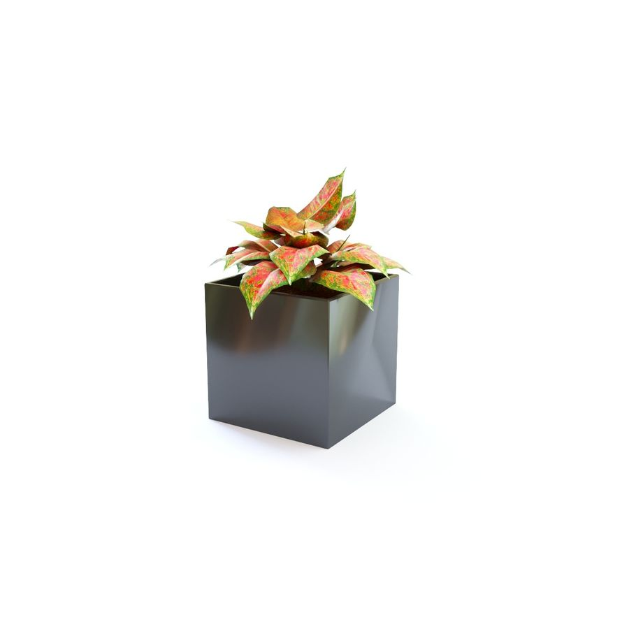 flowers in pots royalty-free 3d model - Preview no. 7