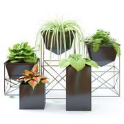 fleurs en pots 3d model