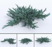 creeping juniper blue chip set 3d model