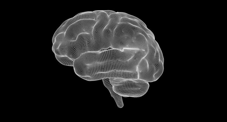 Brain Human Anatomy royalty-free 3d model - Preview no. 10