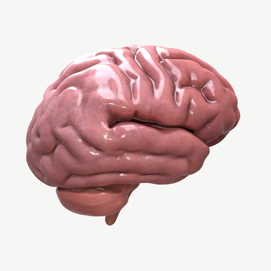 Brain Human Anatomy royalty-free 3d model - Preview no. 2