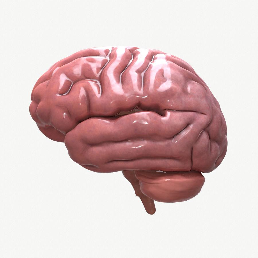 Brain Human Anatomy royalty-free 3d model - Preview no. 1
