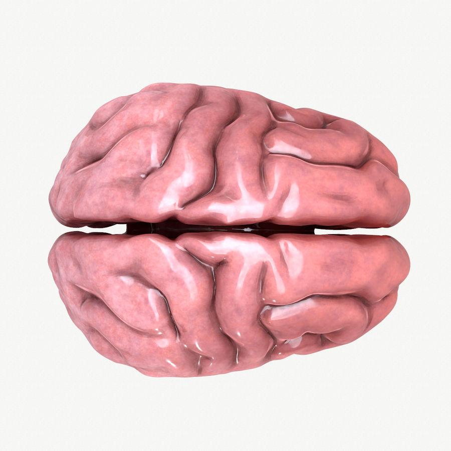 Brain Human Anatomy royalty-free 3d model - Preview no. 3