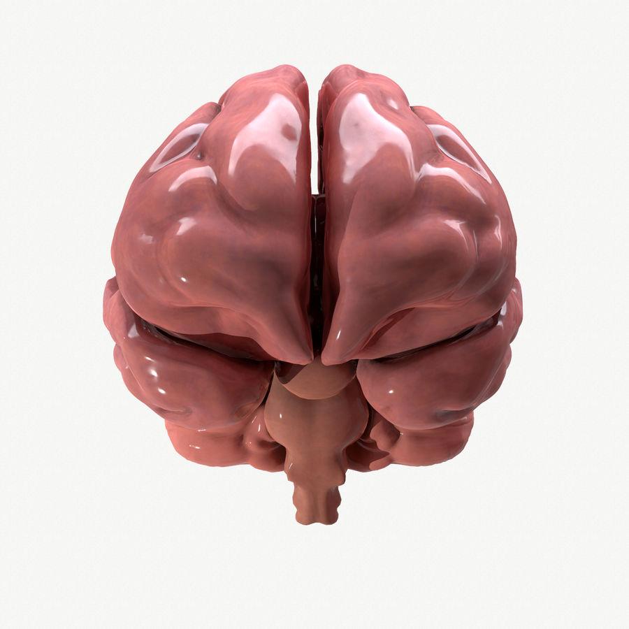 Brain Human Anatomy royalty-free 3d model - Preview no. 5