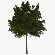绿树 3d model