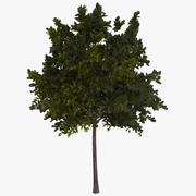 Ağaç yeşil 3d model