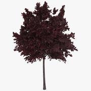 树红 3d model