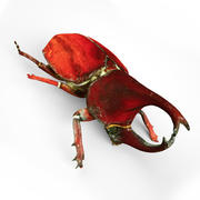 Bug Rhinoceros Beetle 3d model