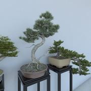 Potplanten (Bonsai) 3d model
