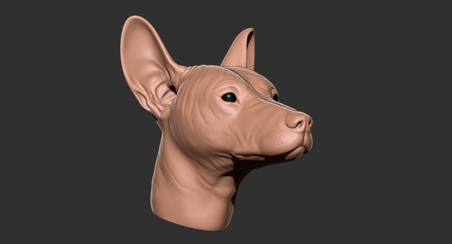 Mexican Hairless Dog Head 2019 royalty-free 3d model - Preview no. 21