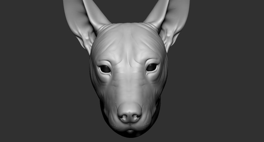 Mexican Hairless Dog Head 2019 royalty-free 3d model - Preview no. 13