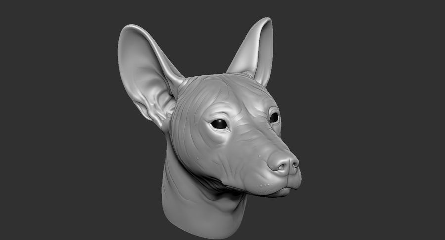 Mexican Hairless Dog Head 2019 royalty-free 3d model - Preview no. 17