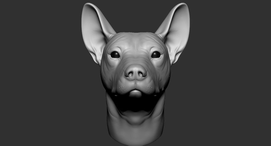 Mexican Hairless Dog Head 2019 royalty-free 3d model - Preview no. 3