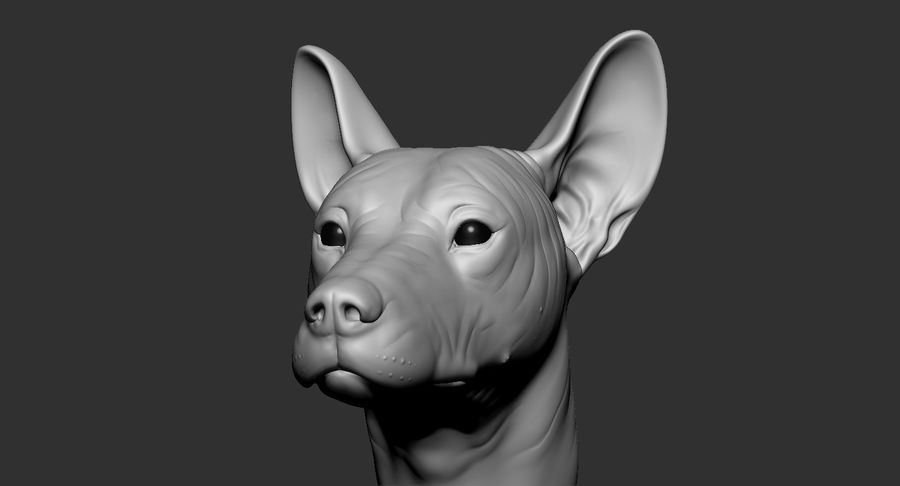 Mexican Hairless Dog Head 2019 royalty-free 3d model - Preview no. 12