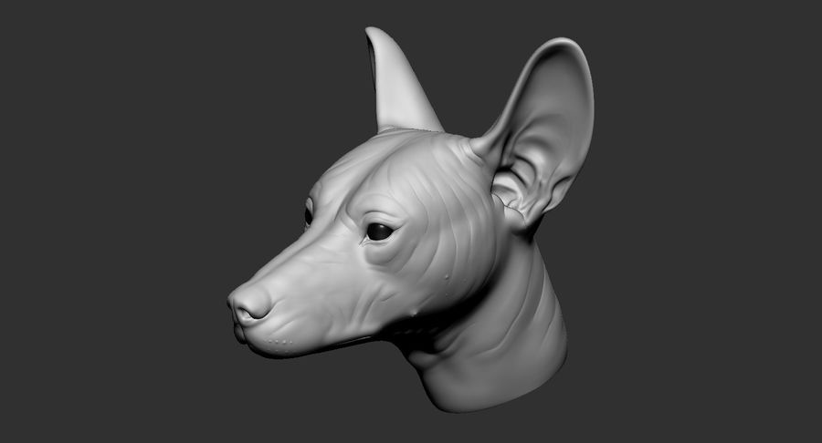 Mexican Hairless Dog Head 2019 royalty-free 3d model - Preview no. 5