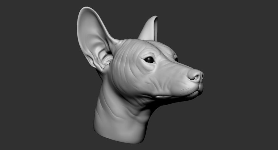 Mexican Hairless Dog Head 2019 royalty-free 3d model - Preview no. 9