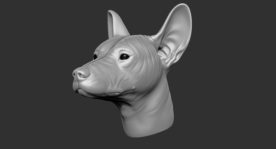 Mexican Hairless Dog Head 2019 royalty-free 3d model - Preview no. 16