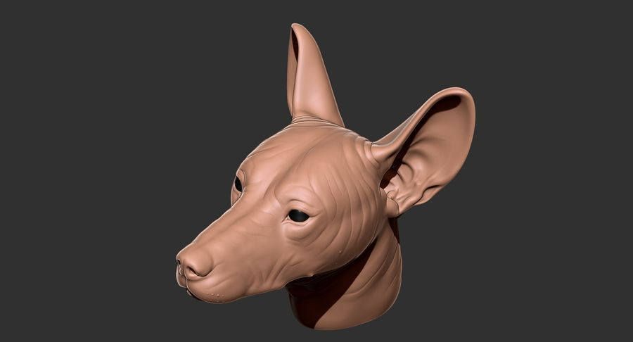 Mexican Hairless Dog Head 2019 royalty-free 3d model - Preview no. 20
