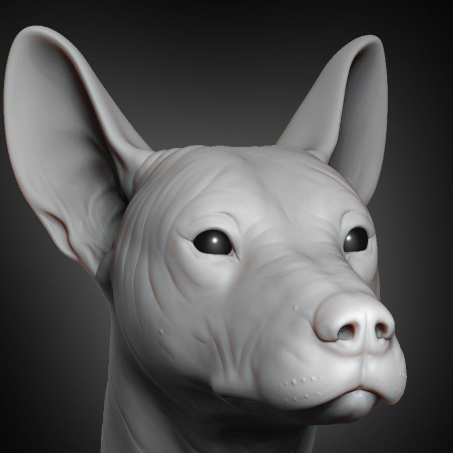 Mexican Hairless Dog Head 2019 royalty-free 3d model - Preview no. 1