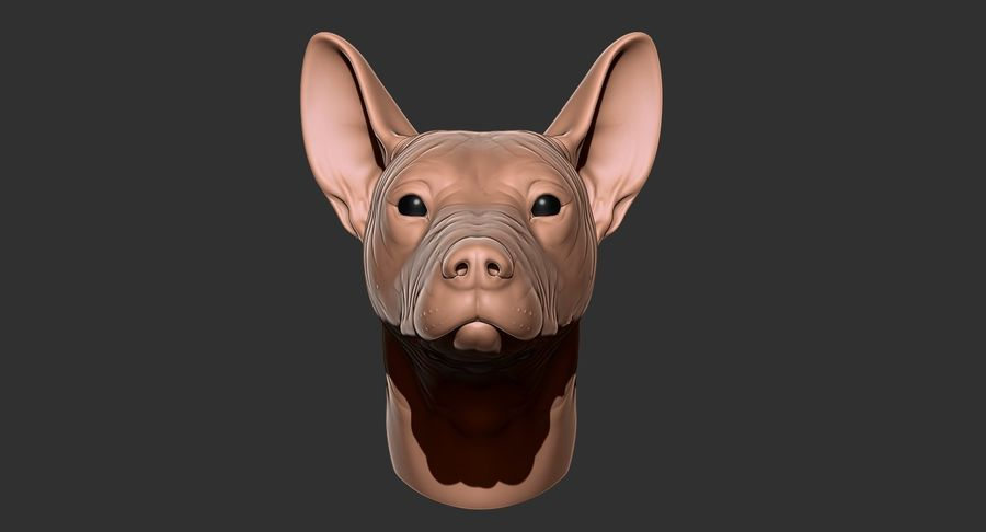 Mexican Hairless Dog Head 2019 royalty-free 3d model - Preview no. 18