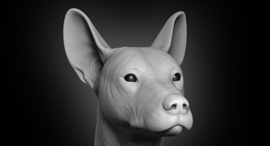 Mexican Hairless Dog Head 2019 royalty-free 3d model - Preview no. 2