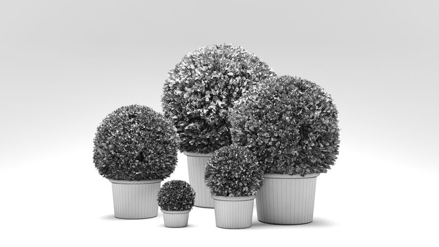 Boxwood Trees royalty-free 3d model - Preview no. 8