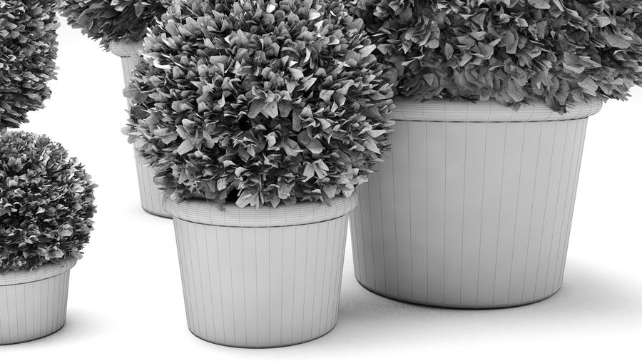 Boxwood Trees royalty-free 3d model - Preview no. 9