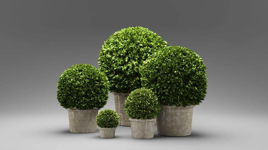 Boxwood Trees royalty-free 3d model - Preview no. 2