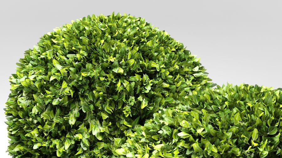 Boxwood Trees royalty-free 3d model - Preview no. 7