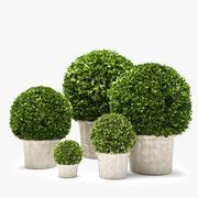 ツゲの木 3d model