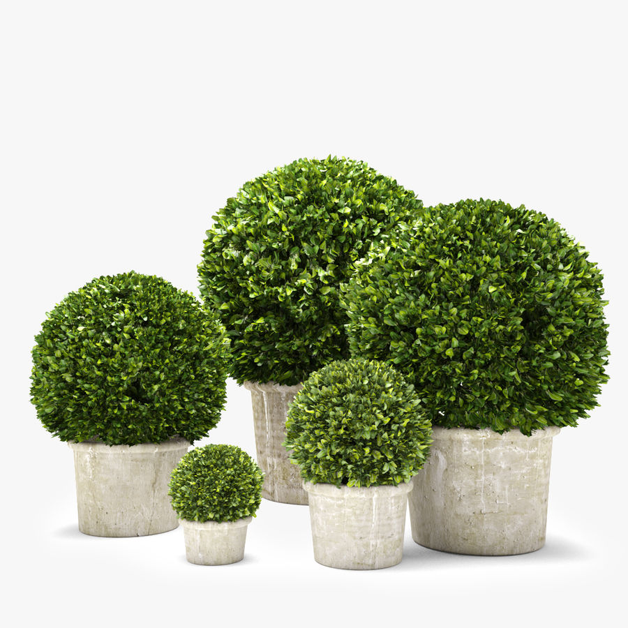 Boxwood Trees royalty-free 3d model - Preview no. 1