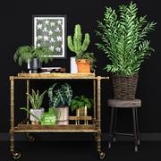 Evergreen Indoor House Plants Collection 3d model