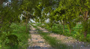 Forest Green Path 3d model