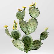 Cactus prickly pear 3d model