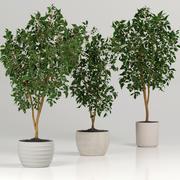 Zimmerpflanzen 3d model