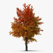 秋の梨の木 3d model