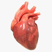 Menselijk hart 3d model