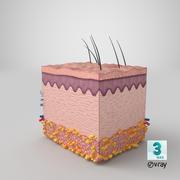 Anatomía de la piel modelo 3d