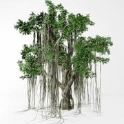 Banyan ağacı 3d model