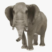 Elephant 01 Low poly 3d model