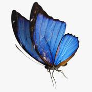 파란 나비의 나비 3d model