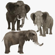 Elephant Collection 3d model