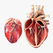 Coeur avec coupe transversale anatomique 3d model