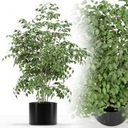 植物采集153 3d model