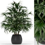 식물 수집 170 3d model