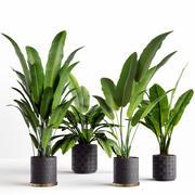 växter 3d model