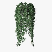 Ivy in pot 08 3d model