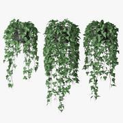 Ivy in pot 09 3d model