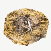 卵の巣 3d model