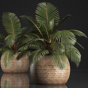 Decorative palm tree in the basket 3d model